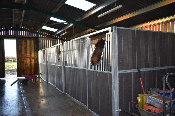 Internal Horse Stables in barn with horse