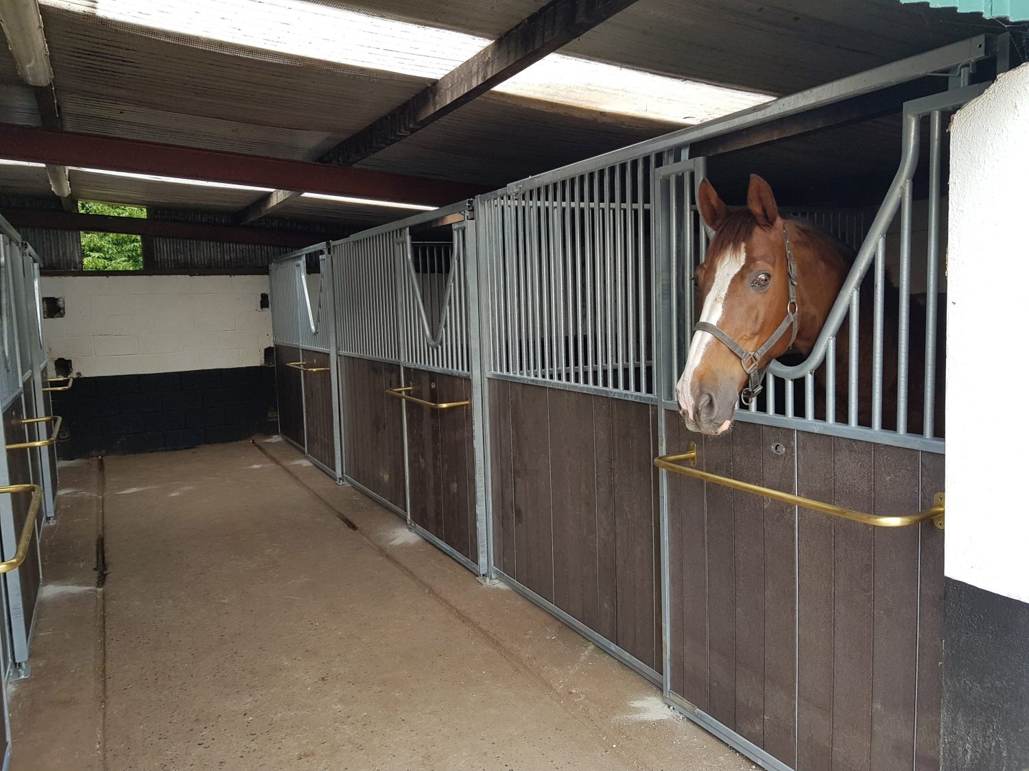 Do Horses Need A Stable?