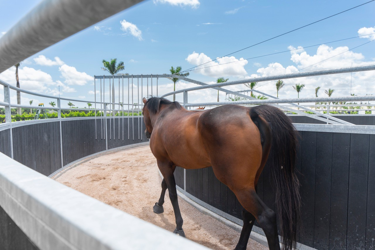 What Are The Advantages Of Horse Walkers?